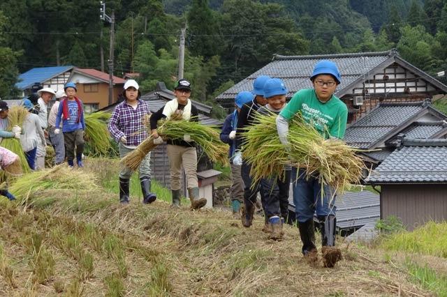 稲刈りを体験する荒川区立第二峡田小の児童が